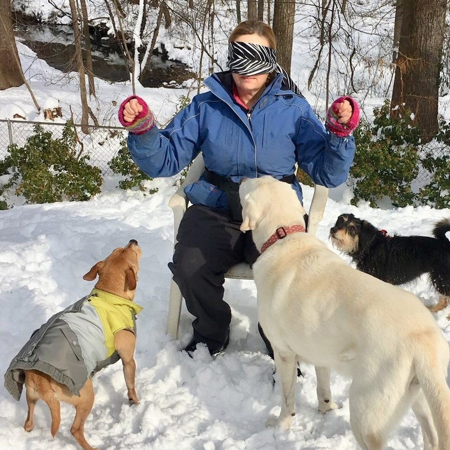 Photo credit Lenore Boulet https://www.lenorebouletphoto.com/ featuring lunch bunch dogs (left to right) Crazy Charlie, Lady Charley, and Aero