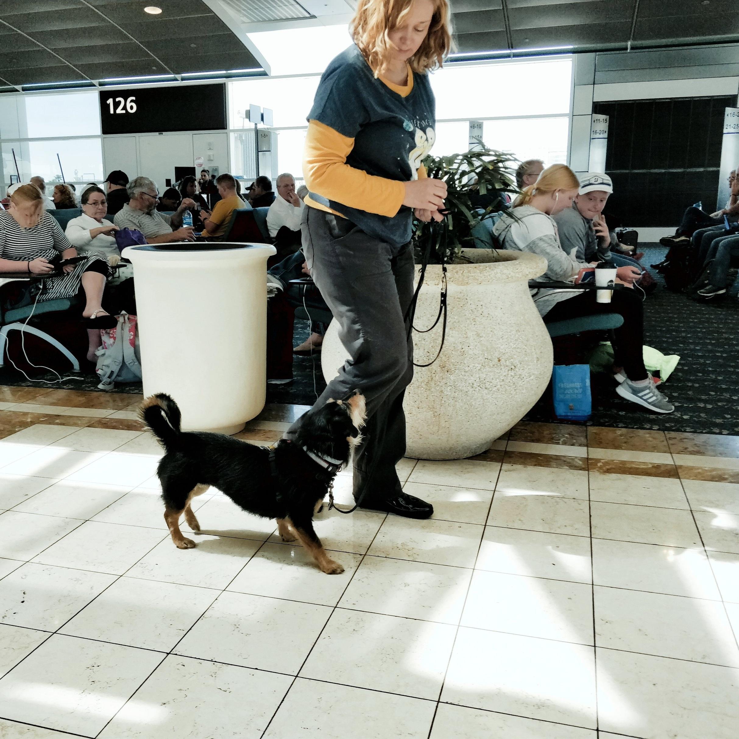 Aero walking through the airport