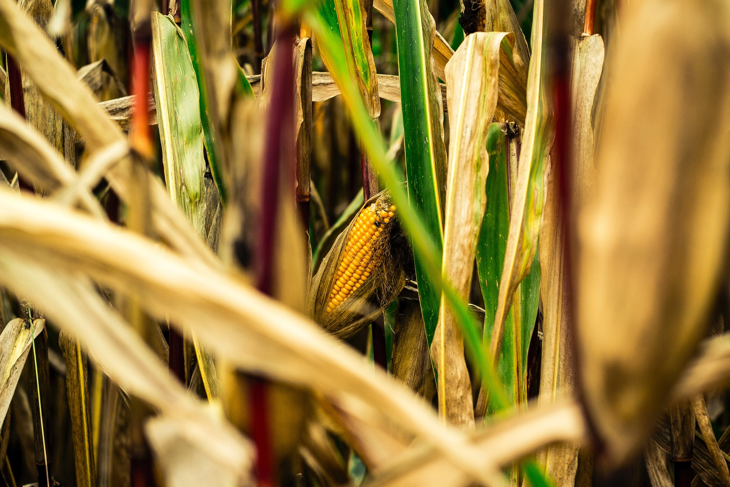 agriculture-blur-bright-614006.jpg