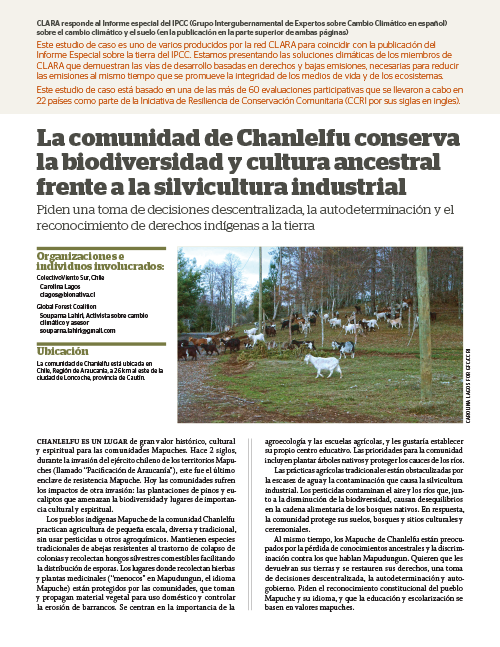 Global Forest Coalition - Chile - SP