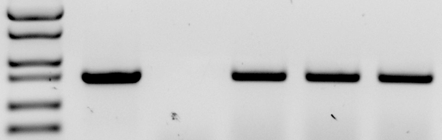Genotyping - 30$ + 12$ / line