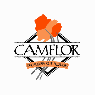 Camflor   Our story begins in 1980, when the Campos family migrated to the United States from Mexico to pursue their passion. With their collective skills in growing and their tenacious perseverance, the family soon established one of the largest and most reputable cut flower growing operations in California, CamFlor, Inc.