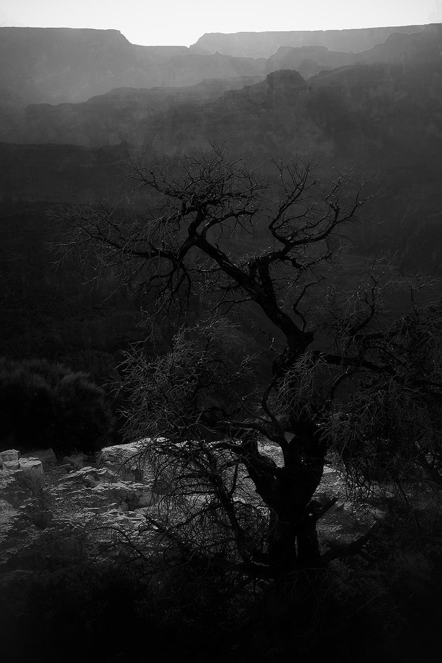 Dead Tree 12 by 18.jpg