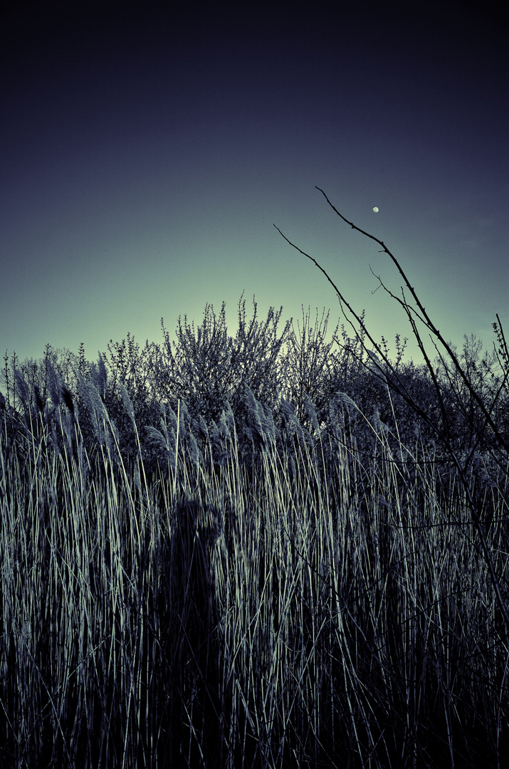 The Onlooker in the Reeds WebUse.jpg
