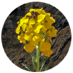 flower circle1.png