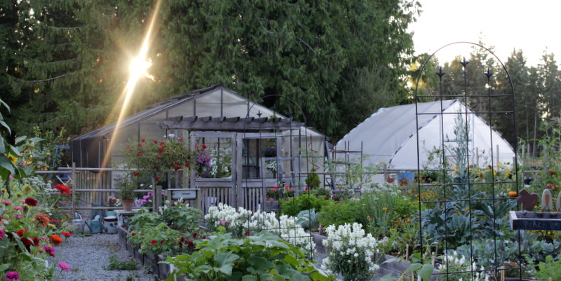 My garden and greenhouses here at Olde Thyme.