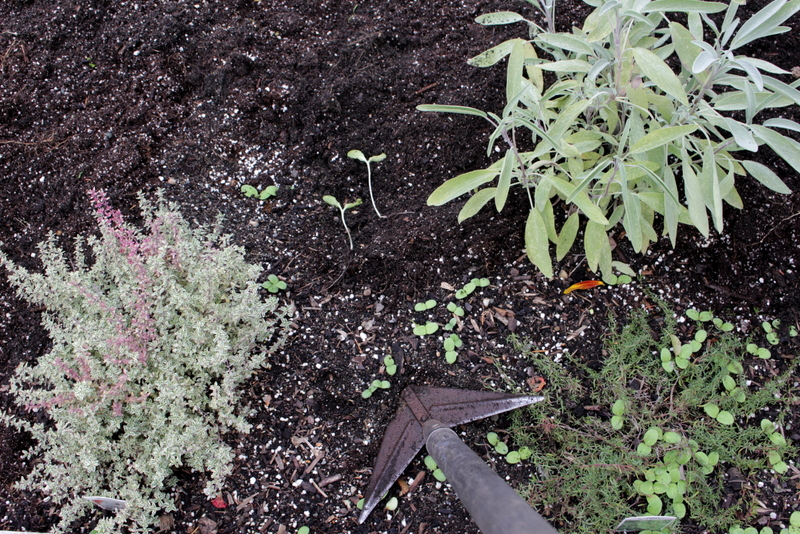 Remove all weeds and extra vegetation from the garden now for less weeds in spring.