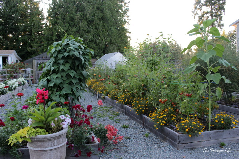 This is my personal garden, right beside the retail area. Everyone is welcome to walk through it, check it out, get inspired, see what is growing and thriving in my no-dig kitchen garden.