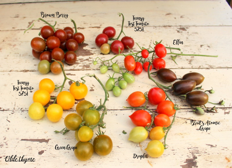 Cherry and grape tomatoes, some trials and others well known. Droplet is a fantastic red, Brown Berry a fantastic dark, and Green Grape is the best of all.