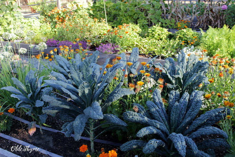 April Markets  Cool weather veggie starters … broccoli, cauliflower, cabbage, kales, lettuces, mescluns, assorted greens, etc…  Herbs, culinary and medicinal.  Seeds, veggie, flower, and lots for the bees!  Early season Bee-Safe Flowers, companion plants and pollinator flowers, too.