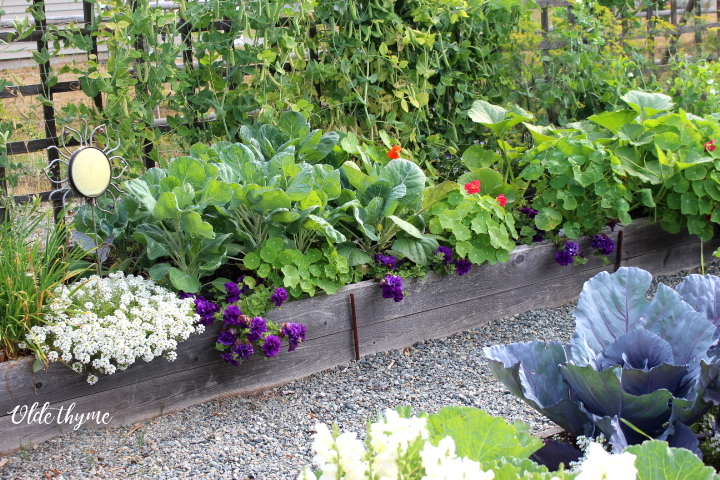 Plant lots of flowers to attract pollinators and beneficial insects.
