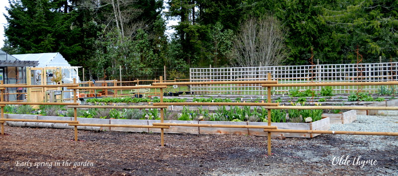 Prep or build your new bed. We live on a rock so we have to go up! You can build formal raised beds with sides or just do mounded gardens with sloping sides.