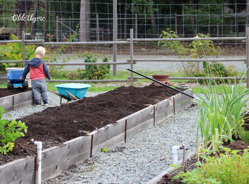 Add lots of compost, fish compost, or manure on top of your garlic bed. Rake it smooth and let sit till planting time.