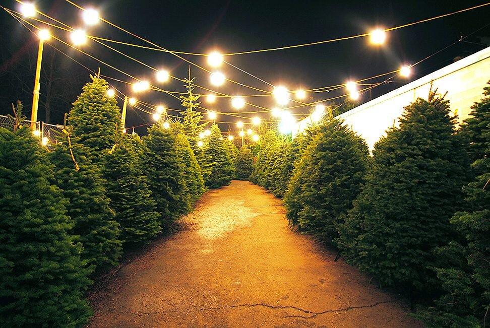 christmas tree lot.jpg