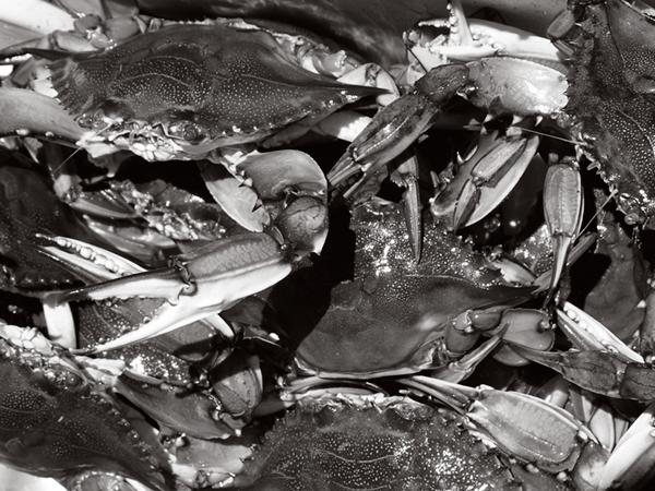 fish_crab.png