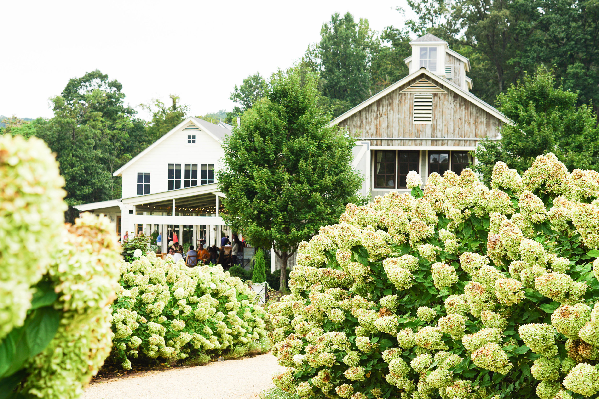 This is always one of the highlights of our trip so I had to put it at the top of the list of things to do. Virginia wine country has so much to offer to the wine lovers, as well as those just along for a fun day. Make a day of winery hoping, sampling the local vino.   My Favorite Wineries:  Pippin Hill  Veritas  King Family  Trump Winery  Early Mountain Vineyards