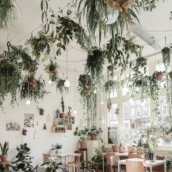 Hanging Plants - Art Studio