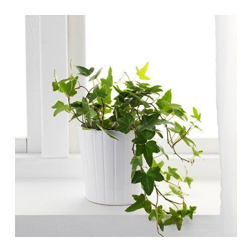 desk potted plant.jpg