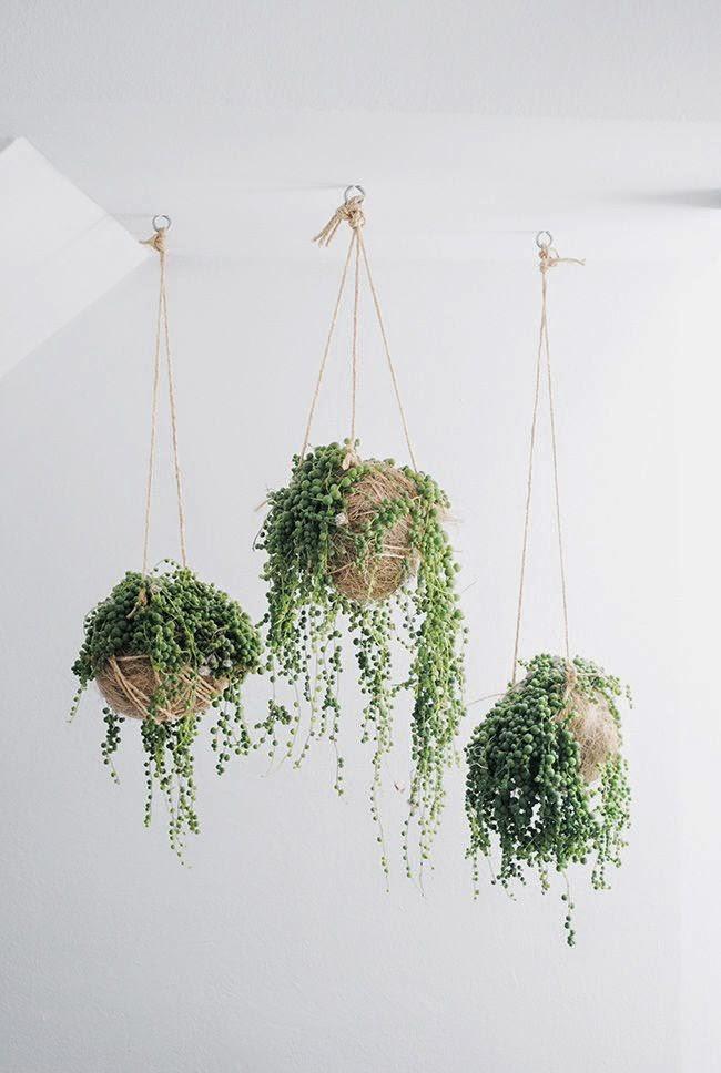 studio hanging plants.jpg