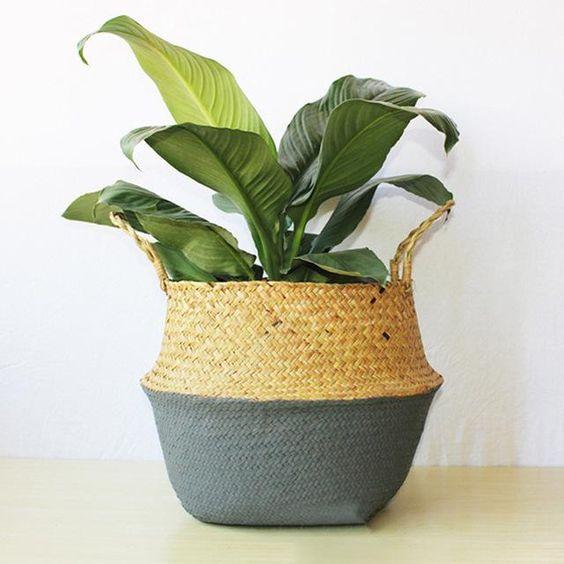 living room plant.jpg