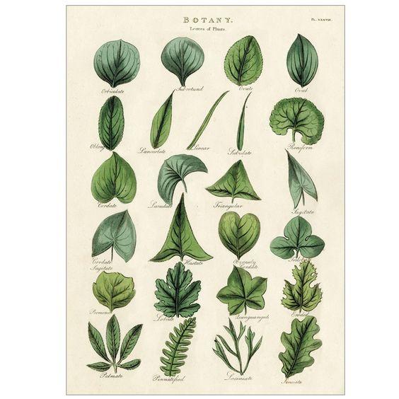 botany poster.jpg