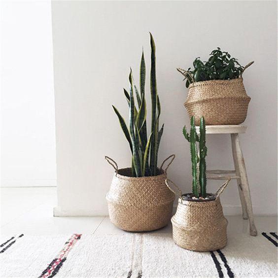 plant baskets.jpg