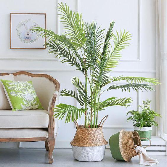 Palm plant in basket.jpg