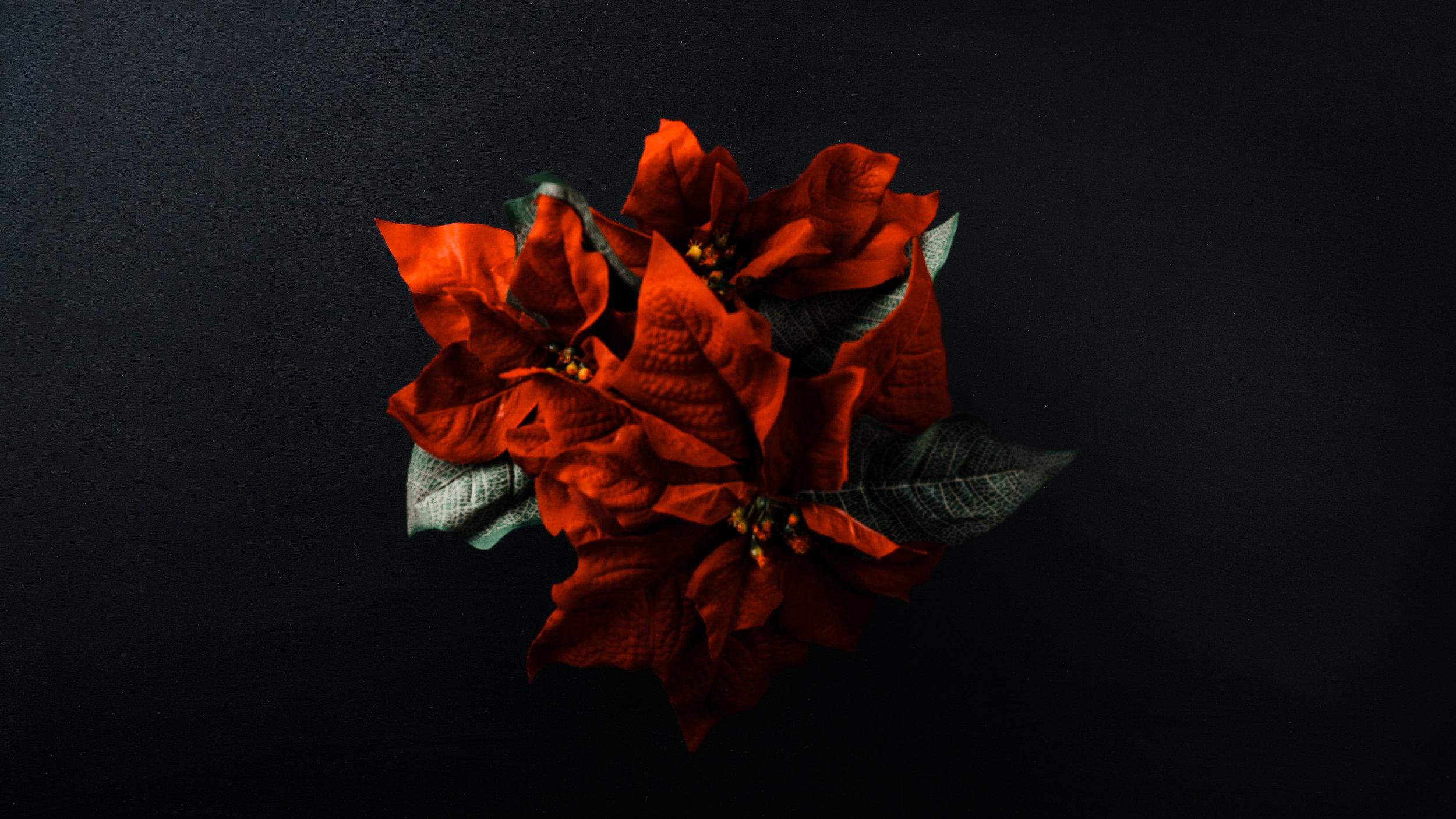 Modern Christmas-69.jpg