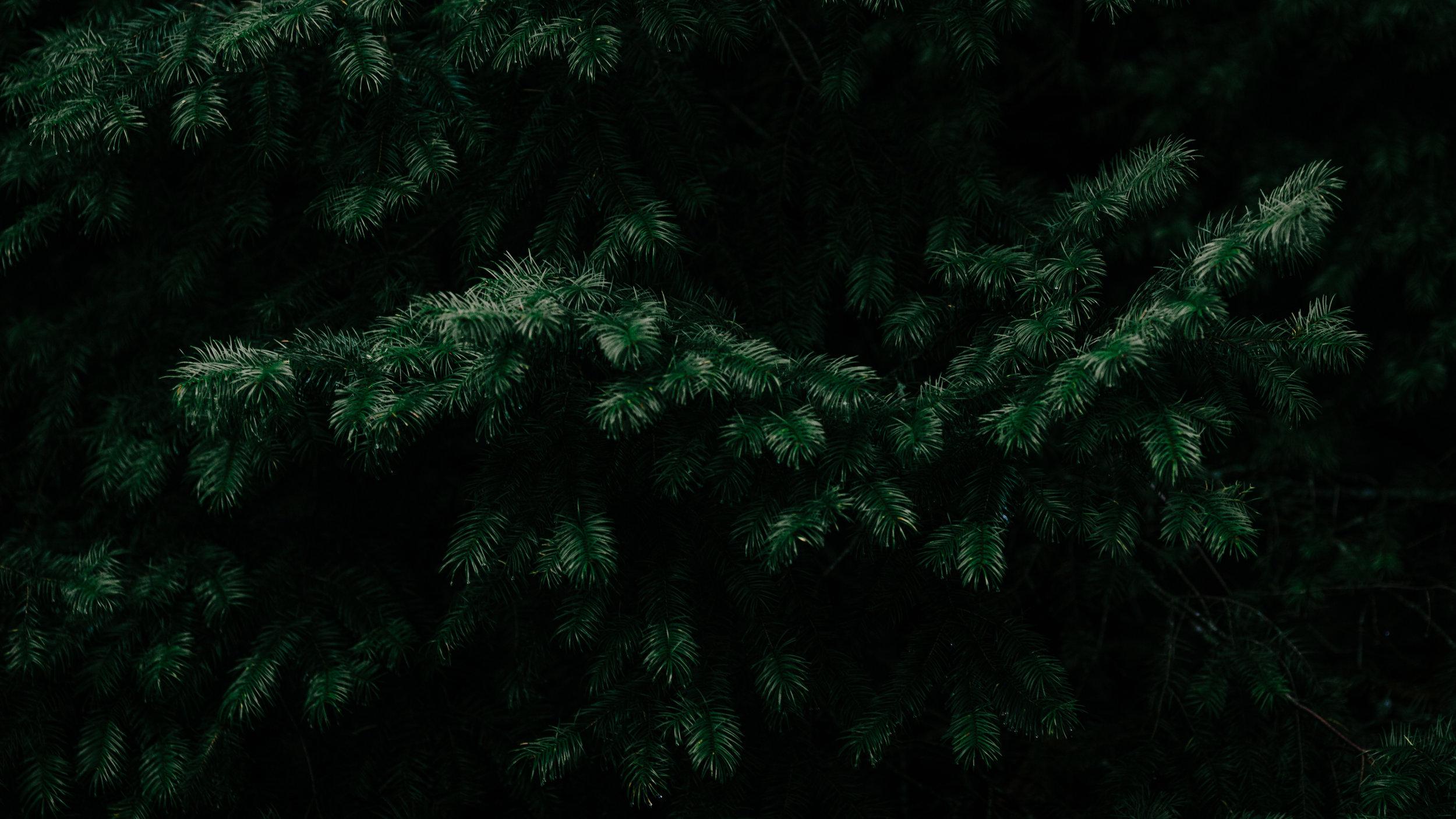 Modern Christmas-103.jpg