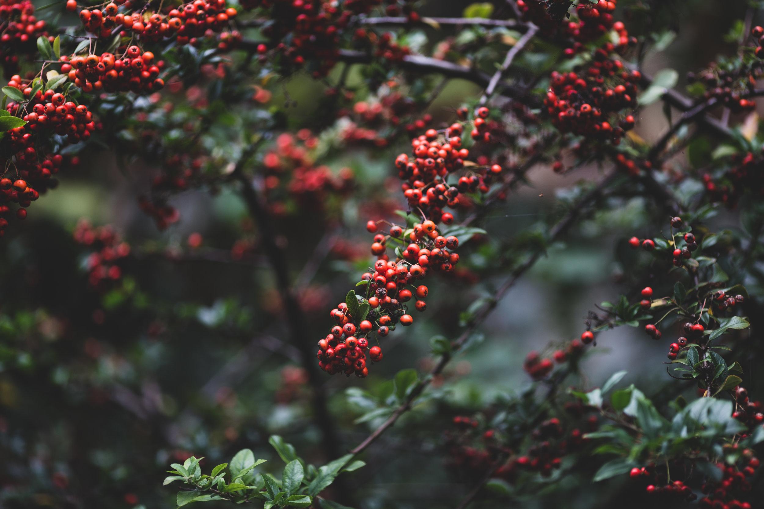 Modern Christmas-116.jpg
