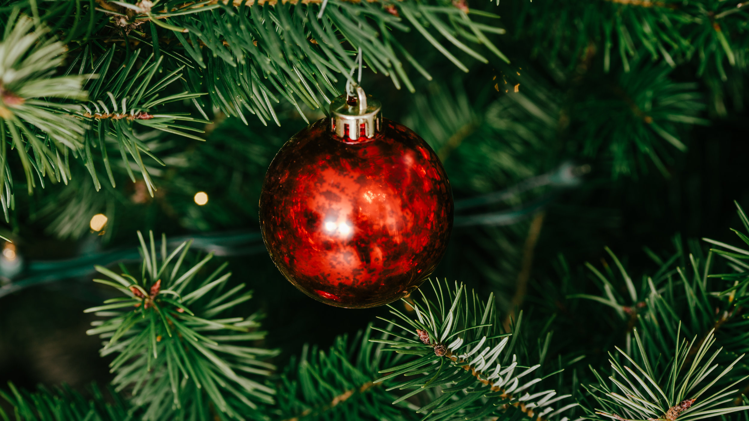 Modern Christmas-139.jpg