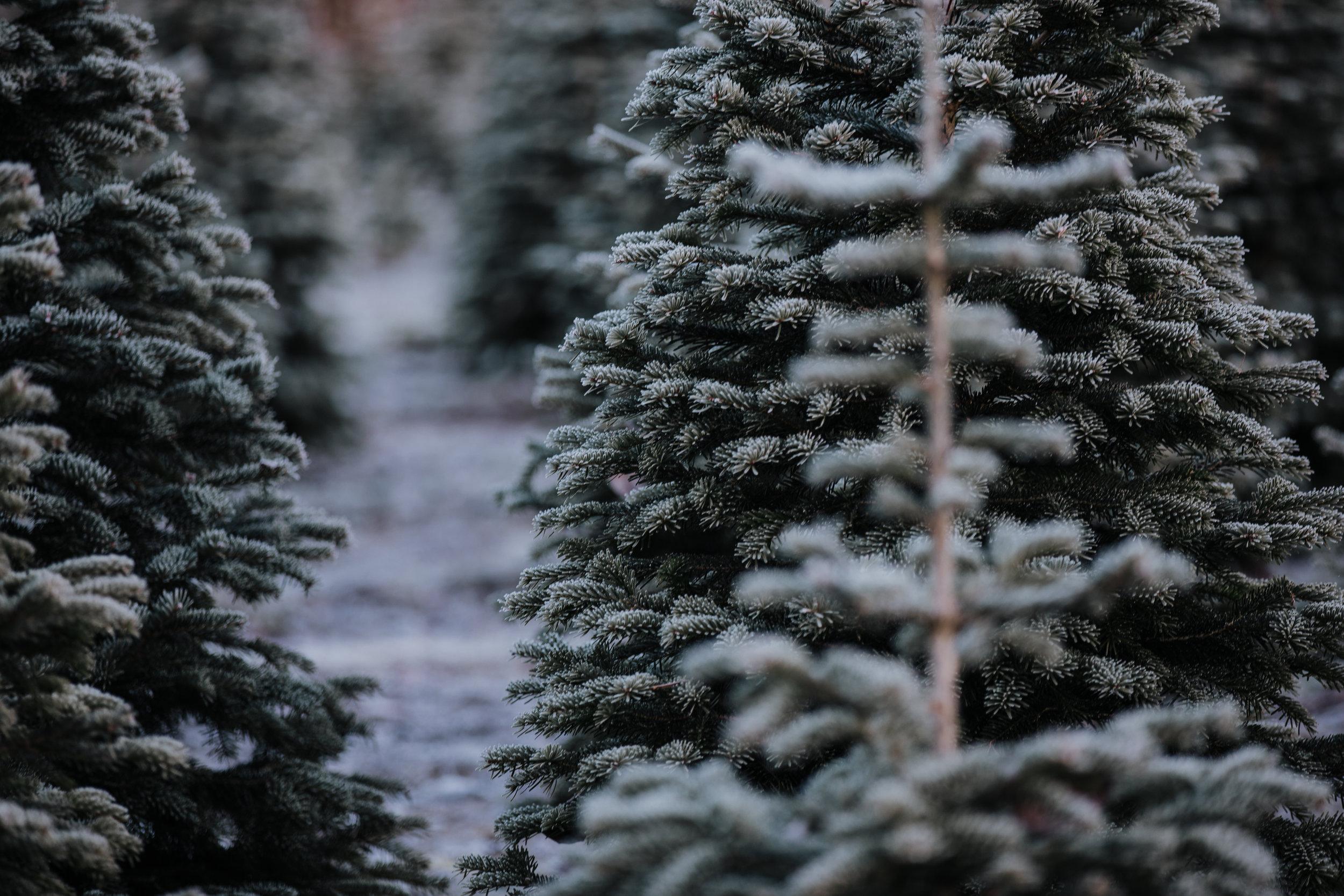 Tree Farm-10.jpg
