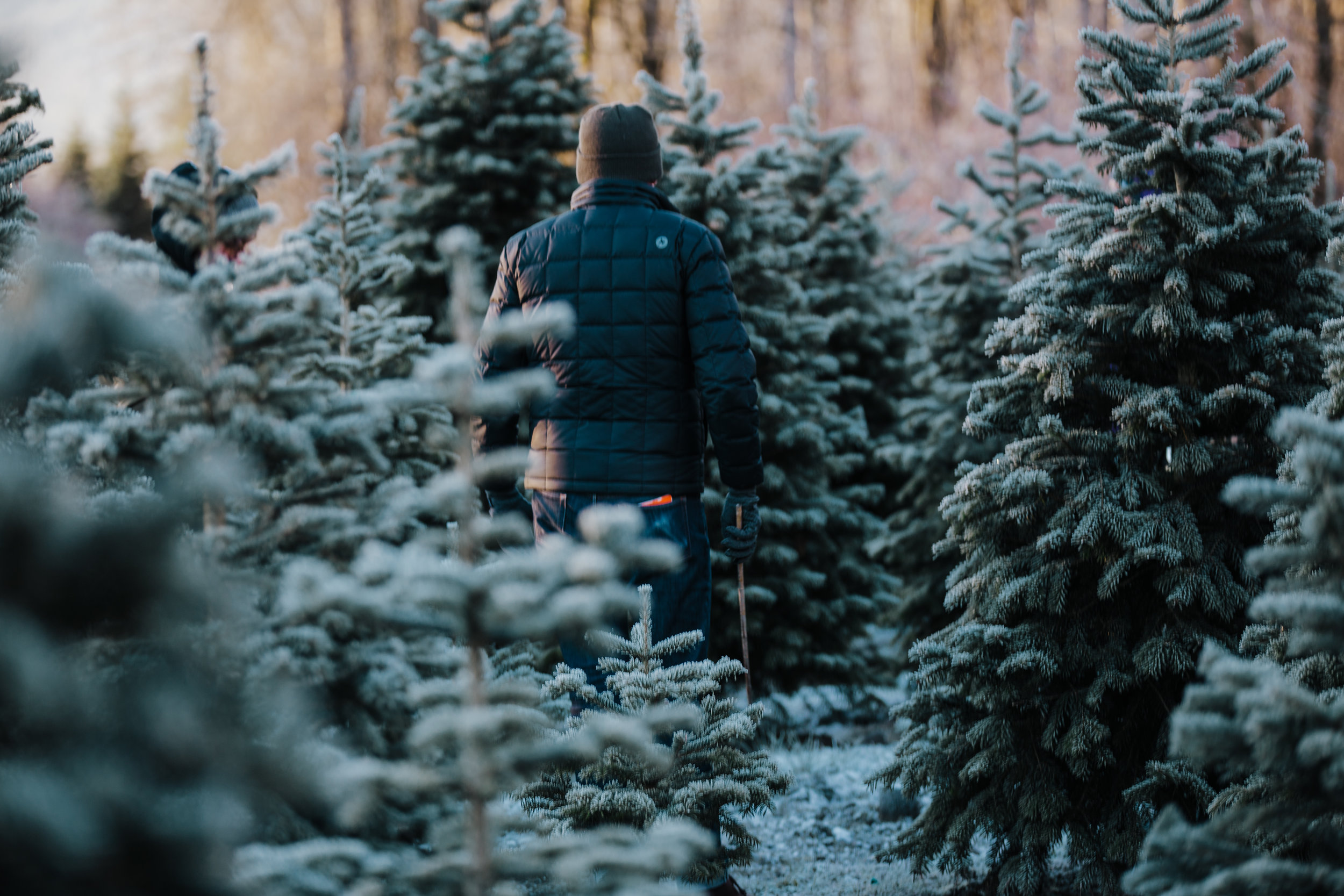 Tree Farm-29.jpg