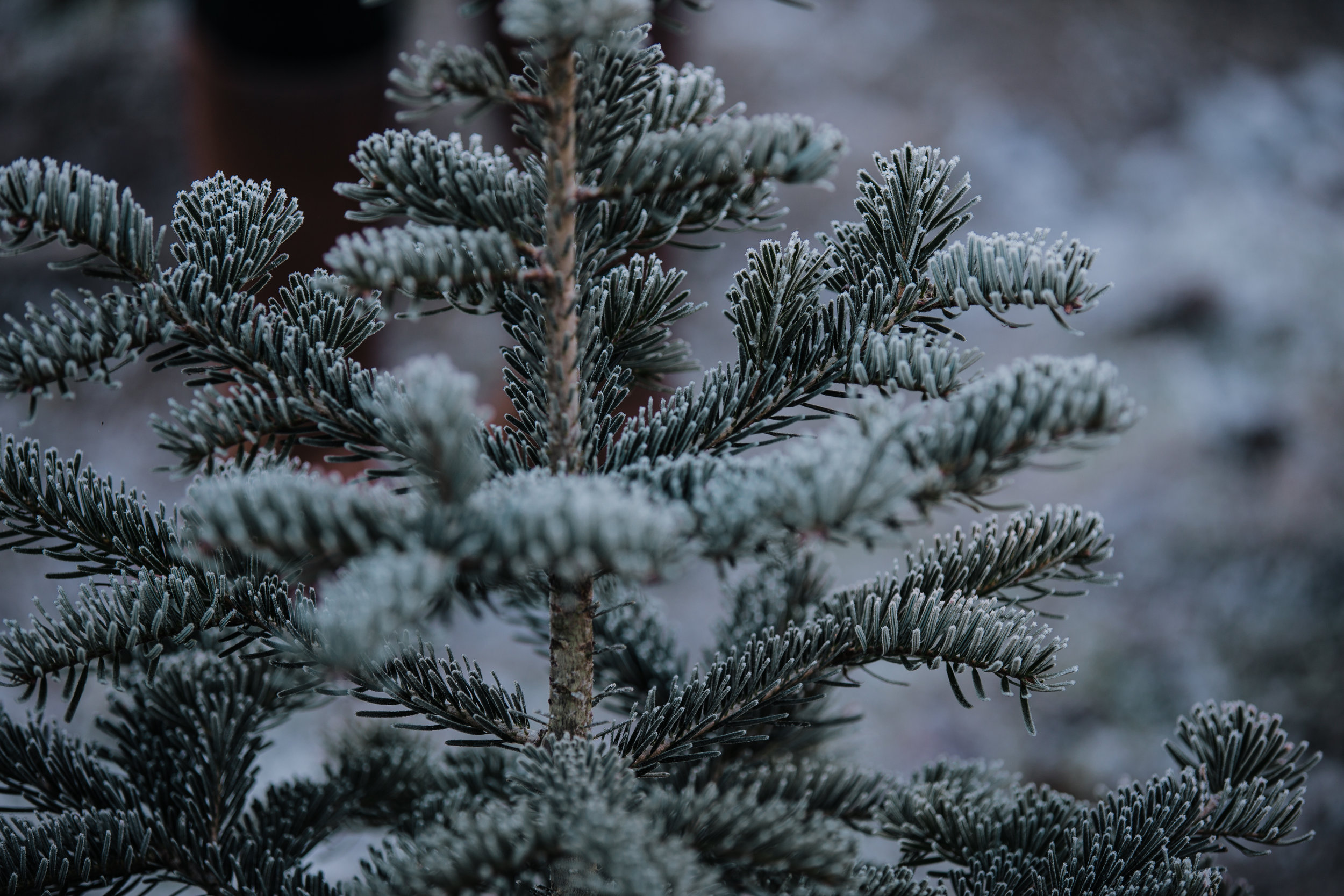 Tree Farm-32.jpg