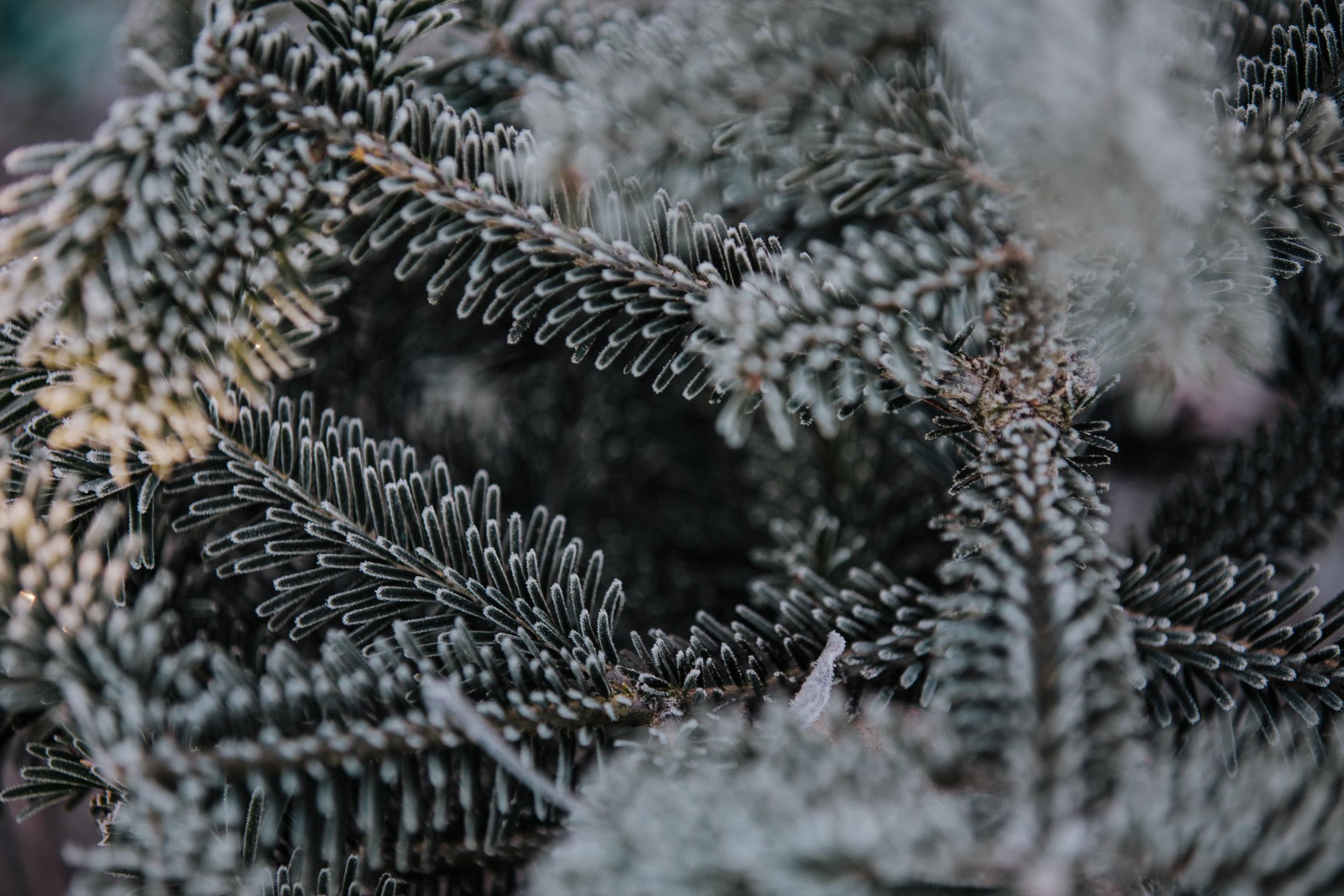 Tree Farm-41.jpg