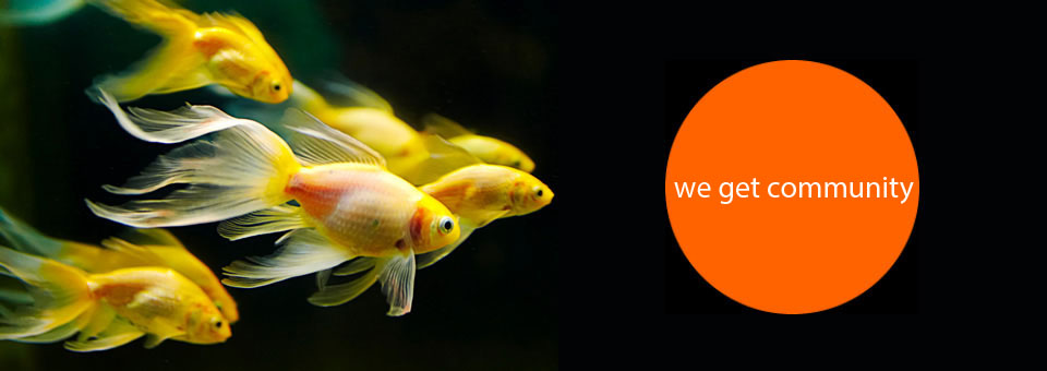 gold fish we get community -- non profits.jpg