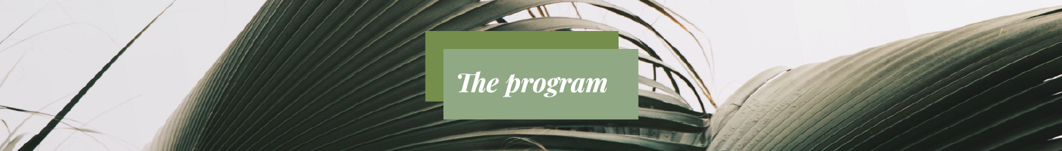 The program-02.png