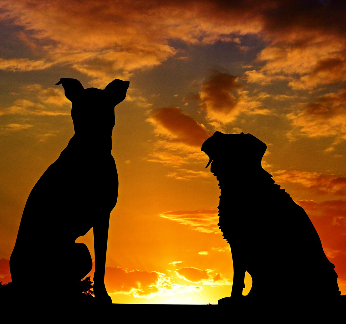 dogs in silhouette.png