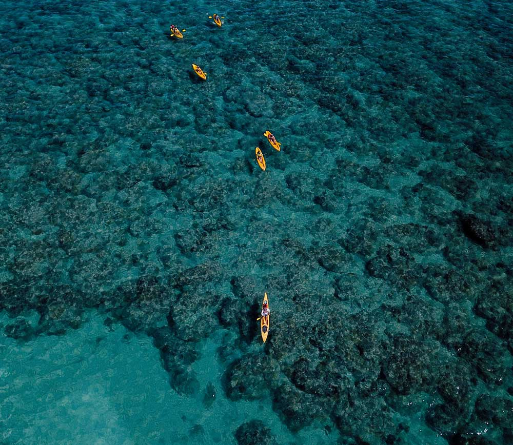 where to see sea turtles on Oahu