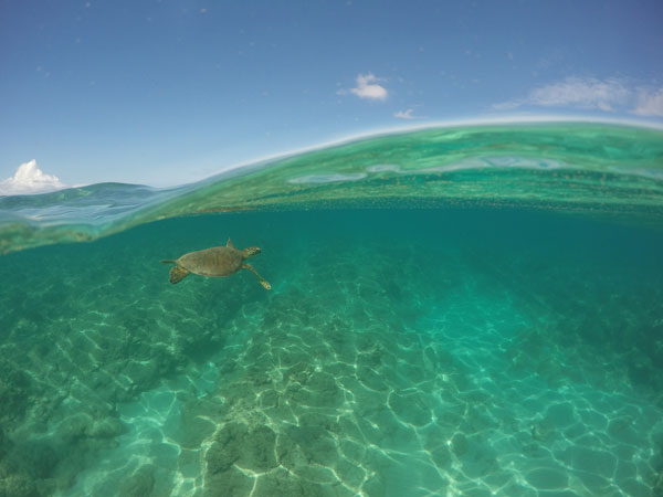 kailua snorkeling