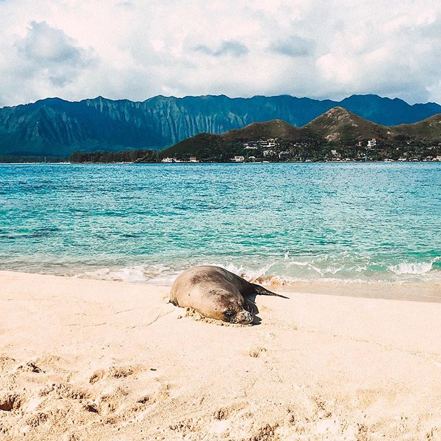 Nothing beats a relaxing day at the beach. Here is Wailea living her best life out on the mokes.