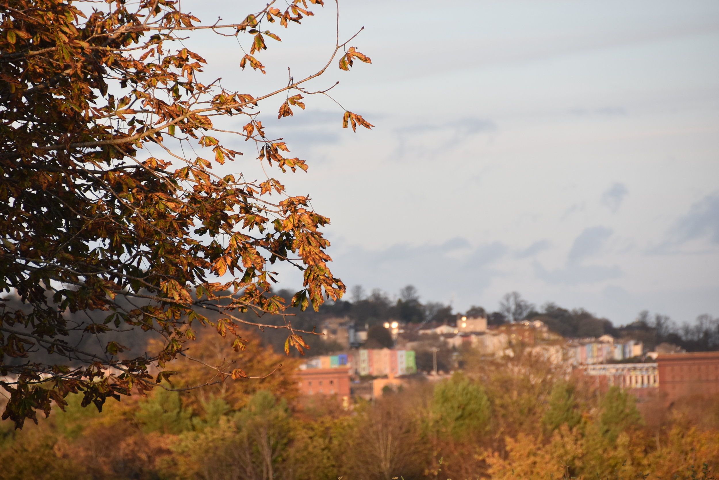 Bristol houses and autumn leaves