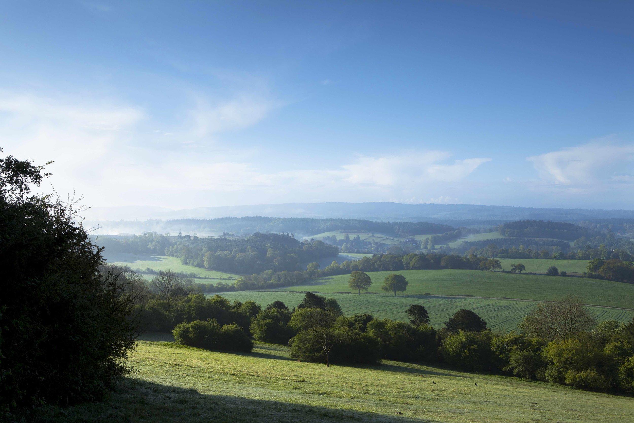 The Surrey Hills -