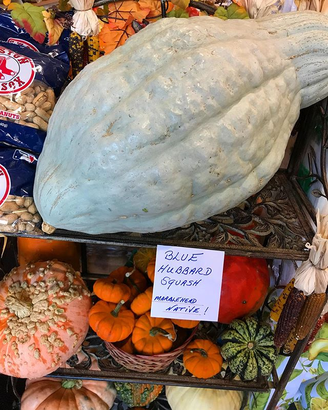 At Maria's we pride ourselves with getting our community the freshest produce! We even have Marblehead native Blue Hubbard Squash! Yum 😊