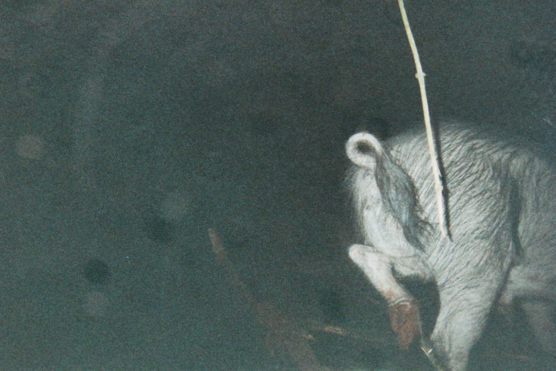 Wild Boar Photos 38.jpg