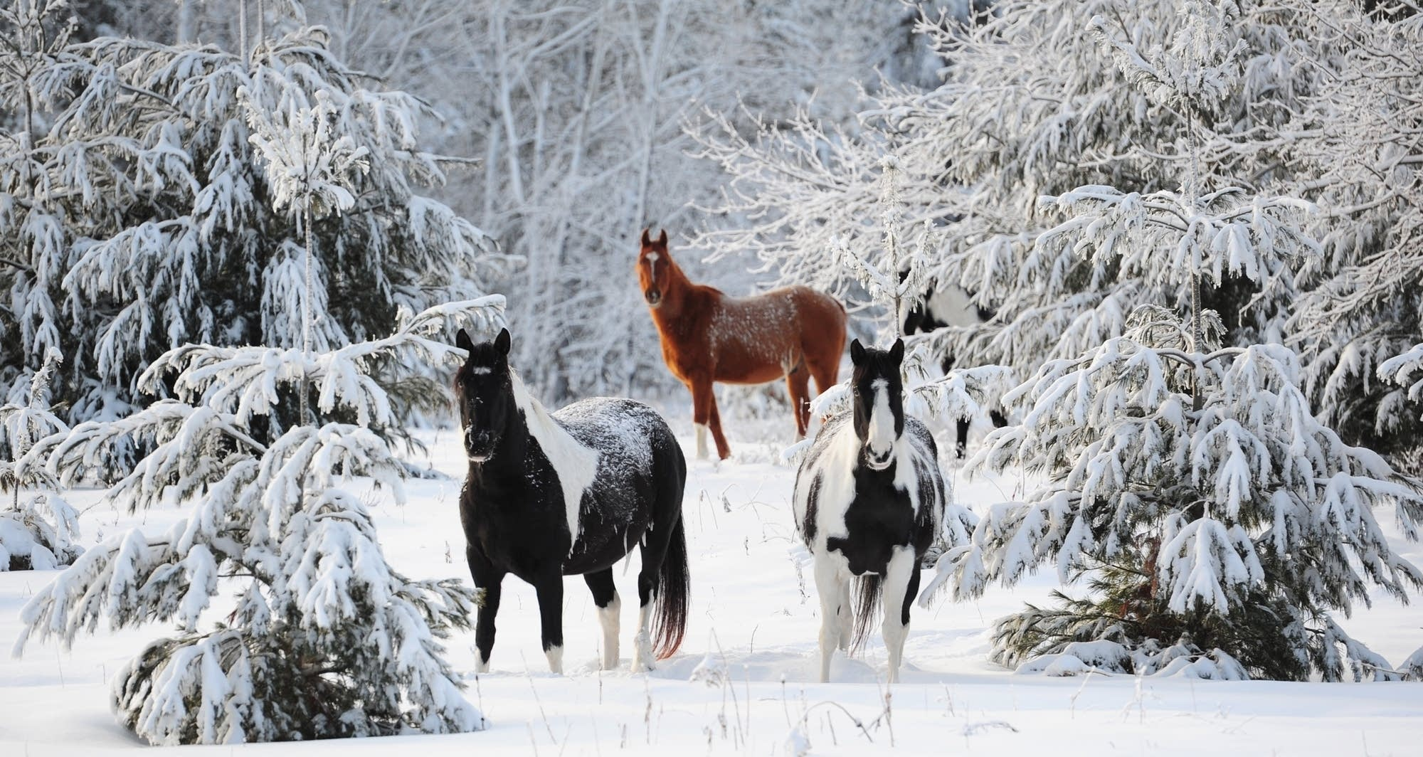 horses-in-the-snow-1.jpg