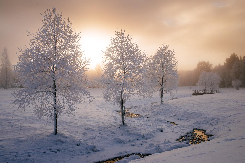 Snowy feild.jpg