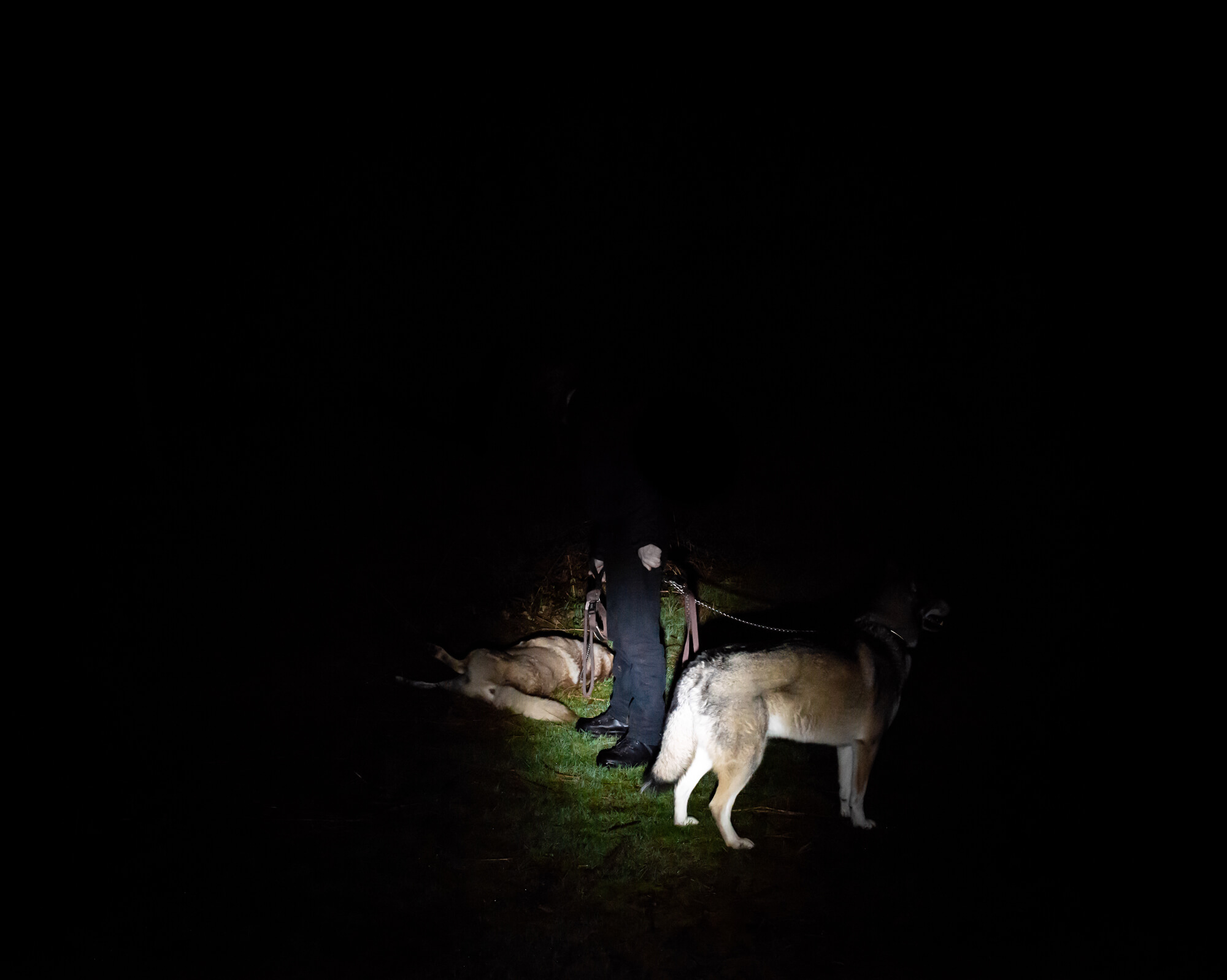 As darkness fell the group arrived. I accompanied Brenda, Bev, Gordy and his two huskies on a night walk around the forest.