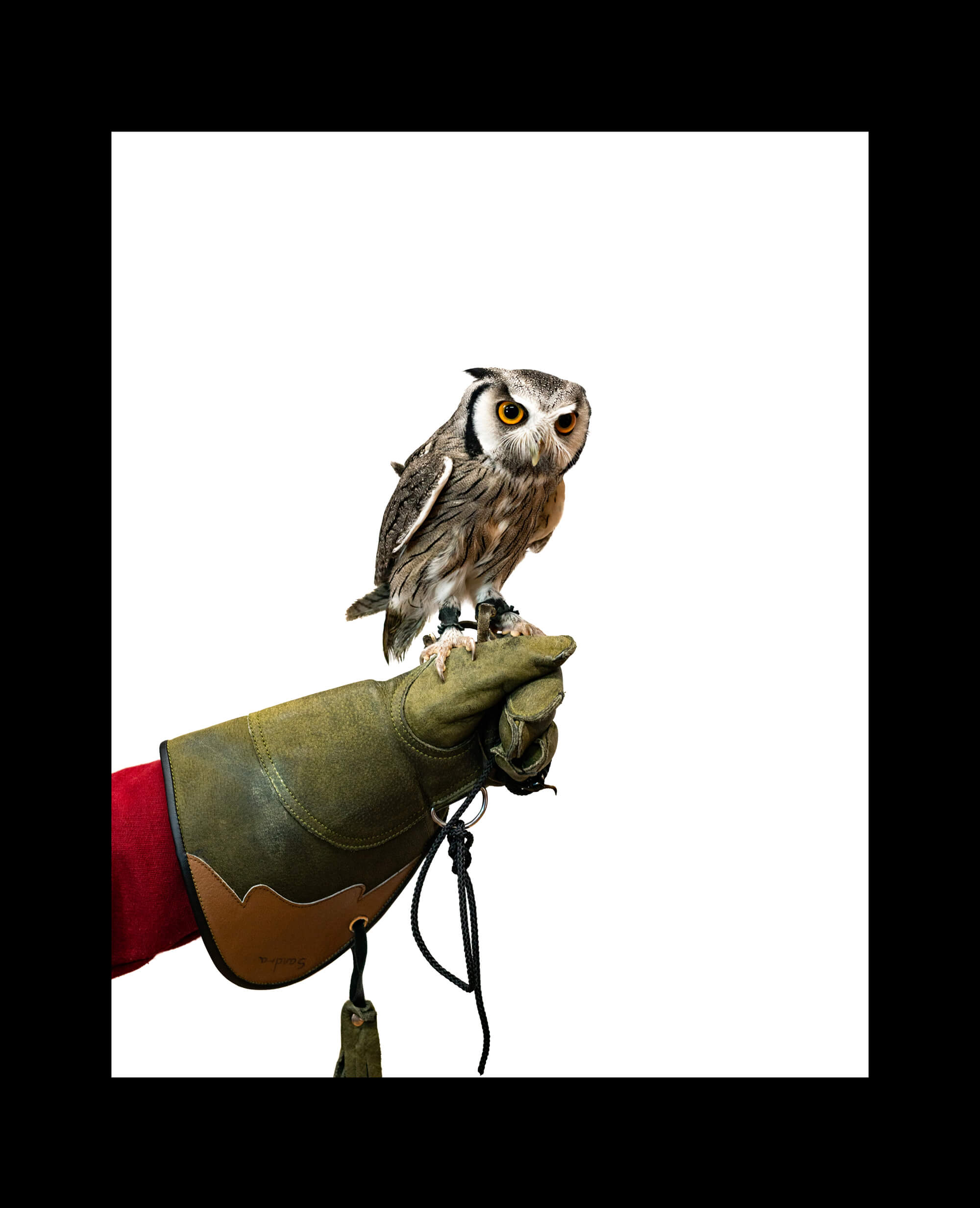 Torbay Owl Club