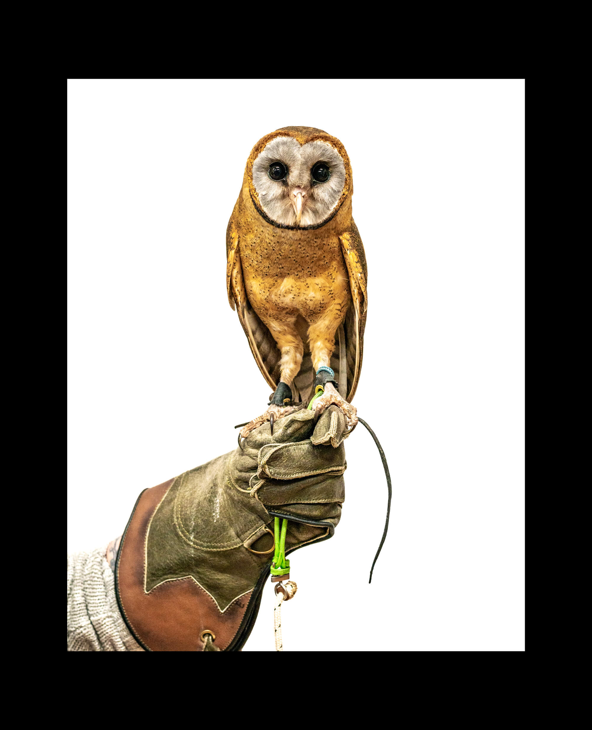 OWL-1-BORDER.jpg